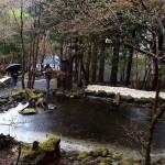 מסע נשי ליפן 2015